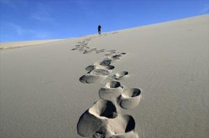 Tournai_desert